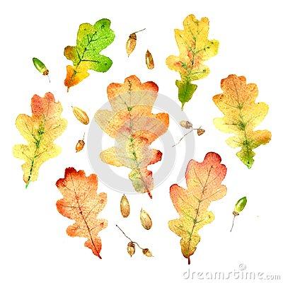 watercolor oak leaves